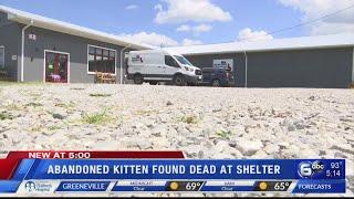 Abandoned kitten found dead at shelter