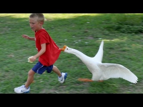 Animals never fail to make us laugh - Super funny animal compilation - UCKy3MG7_If9KlVuvw3rPMfw