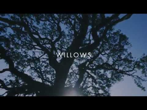Willows (Video Lirik)