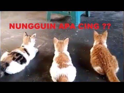 JANGAN NGAKAK LIHAT VIDEO KUCING LUCU BERIKUT INI