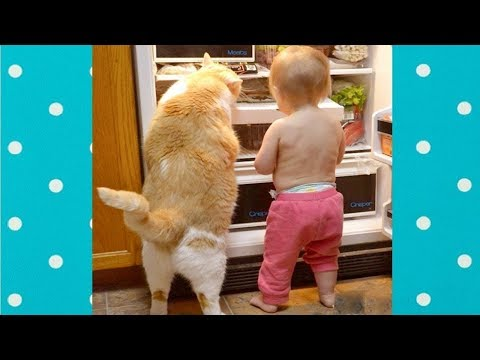 Funny Cats and Babies  Become Best Friend   Funny Pets - UCXZZxk8D8u2AoyycD3I-4PA