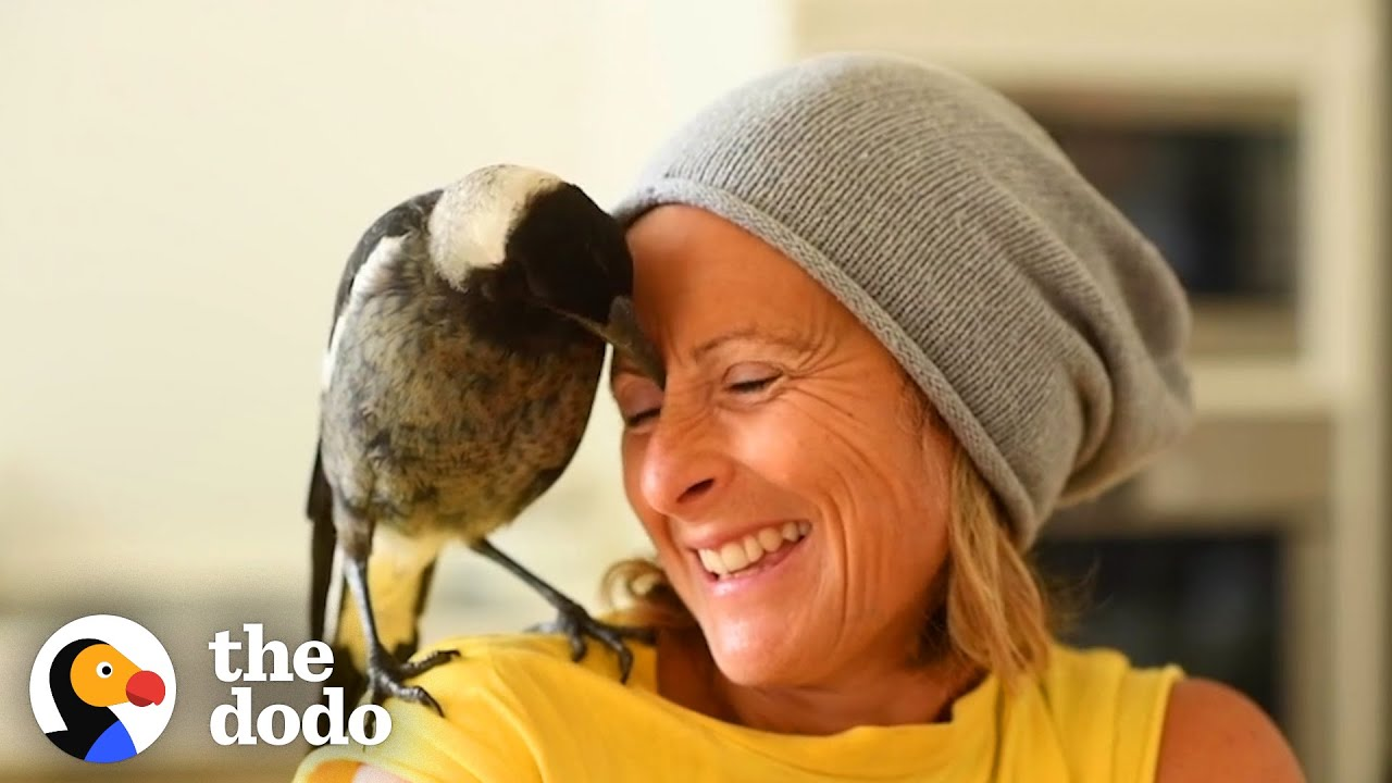 Wild Magpie Knew Exactly What This Family Needed | The Dodo Soulmates