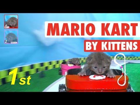 Mario Kart (By Kittens!) || Mario Kat - UCPIvT-zcQl2H0vabdXJGcpg