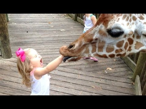 FORGET CATS! Funny KIDS vs ZOO ANIMALS are WAY FUNNIER! - TRY NOT TO LAUGH - UCKy3MG7_If9KlVuvw3rPMfw