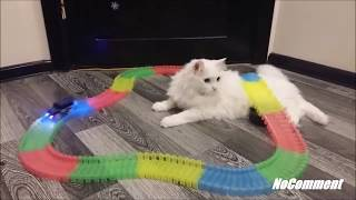 Funny Video Crazy Cats Try Not To Laught Challenge Part 4