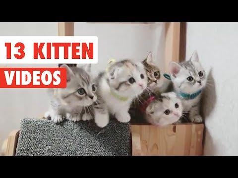 13 Funny Kittens | Funny Cat Video Compilation 2017 - UCPIvT-zcQl2H0vabdXJGcpg