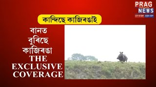 Animals of Kaziranga reside in higher grounds after being trapped by flood!