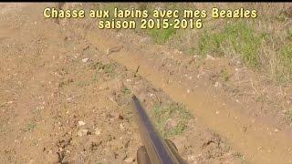 Chasse aux lapins saison 2015-2016 aux chiens courants
