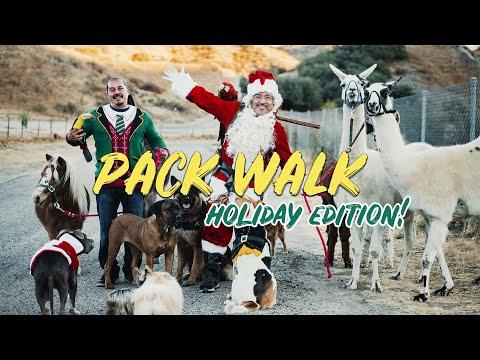 WALKING WITH 8 DIFFERENT SPECIES HOLIDAY EDITION! (CHRISTMAS GIVEAWAY!!)