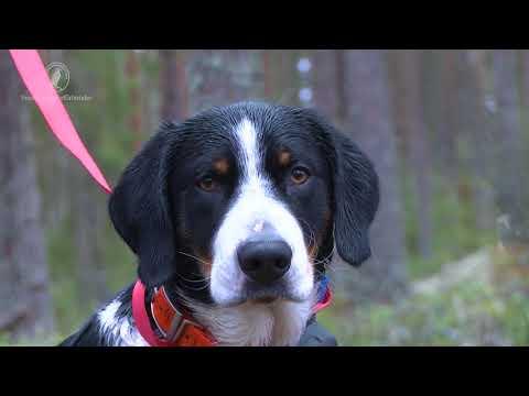 Etik vid rådjursjakt med hund