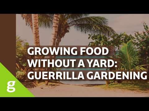 Guerrilla Gardening in Puerto Rico