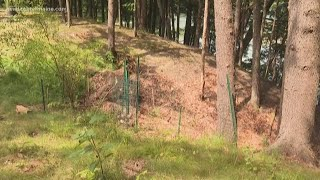 Woman considers lawsuit against Portland Water District after clear-cutting