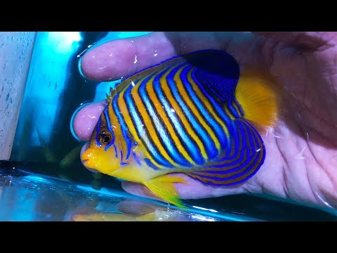 Vlog 34: Unboxing Sensational NEW Fish!