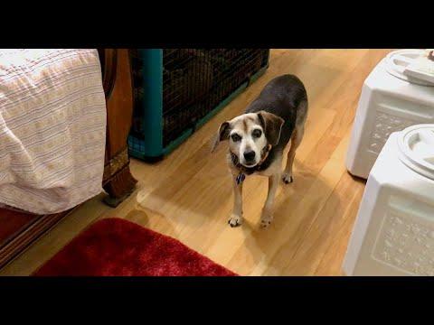 Response Latency In Dog Training