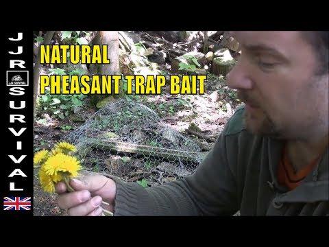 Natural Pheasant Trap Bait