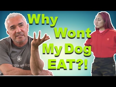 How To Properly Feed Your Dog with Cesar Millan (feat. Lizzy Capri)