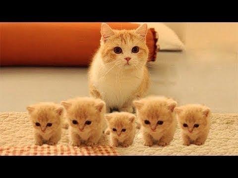 So many cute kittens videos compilation 2018 - UCq5hgY37WAryZCwmehDyCaQ
