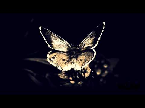 Bassnectar - Butterfly feat. Mimi Page - UCkfMJApxxdy-h41xy_8AHNw
