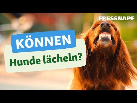 Können Hunde lächeln?