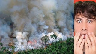 The Amazon Rainforest Is On Fire And It's Almost Completely Gone