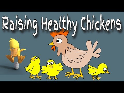 🐔 If You Raise Chickens 🐓 YOU NEED TO DO THIS! 🐤 Keeping Your Chickens Healthy