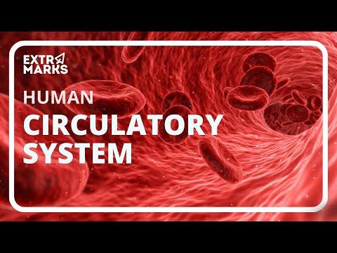 Human Circulatory System – CBSE Class 10th Science Video Tutorials