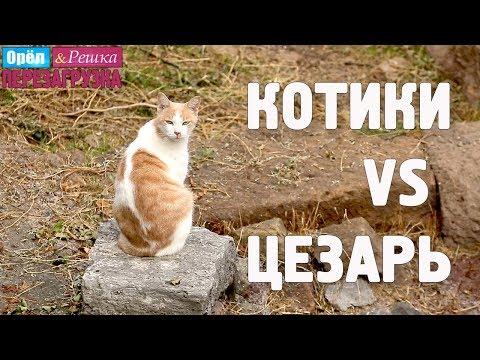 Бездомные коты и достопримечательности Рима! Орёл и Решка. Перезагрузка