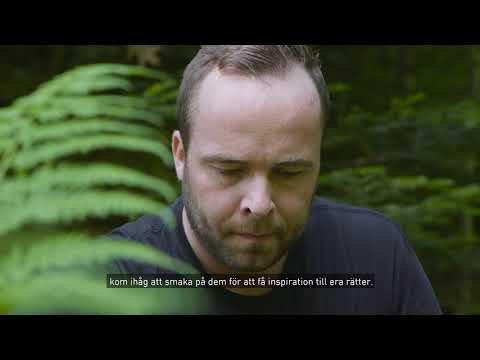 Matlagningstips från Jakob Kofoed - Torkade örter