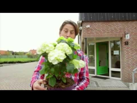 De kunst van de Kweker: 24/7 Green presentator Lodewijk Hoekstra op bezoek bij Forever&Ever