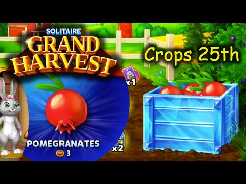 SGH E512 ~ 516   Harvesting Pomegranates   25th Crop section ends. (Solitaire Grand Harvest)