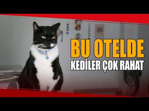 Evini Kedi Oteline Çevirdi, Hem Mutlu Hem Para Kazanıyor