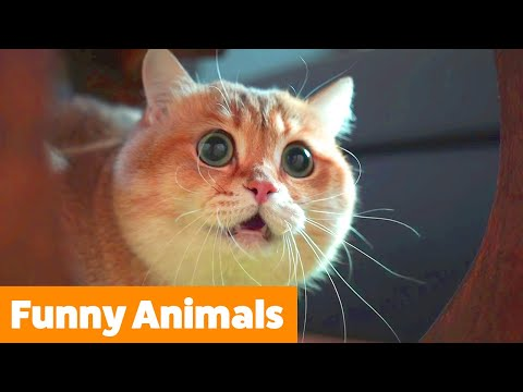 Cute Funny Animals | Funny Pet Videos