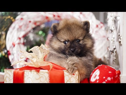 Getting a Puppy for Christmas Compilation Part 2 - UCVUdHi-tdW5AKdzMiTPG97Q