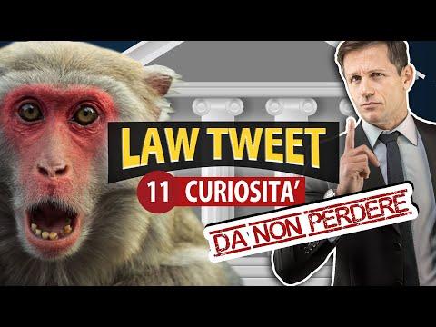 LAW TWEET: 11 curiosità da no perdere | Avv. Angelo Greco