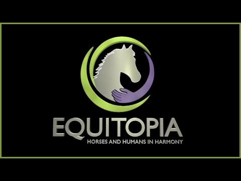 Top 6 Signs Your Saddle May be Hurting Your Horse by Equitopia