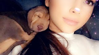 Ariana Grande Rescues Two 'Harry Potter' Pups and Gives Them Magical Names
