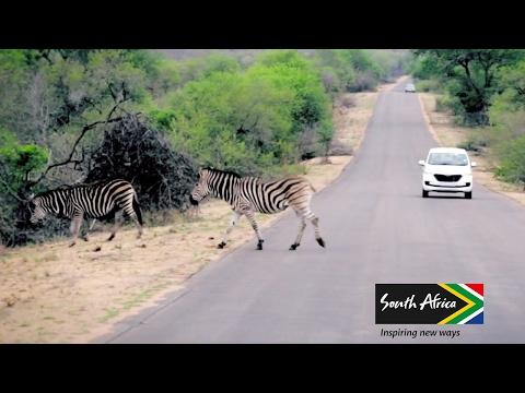 Op gamedrive in het Krugerpark