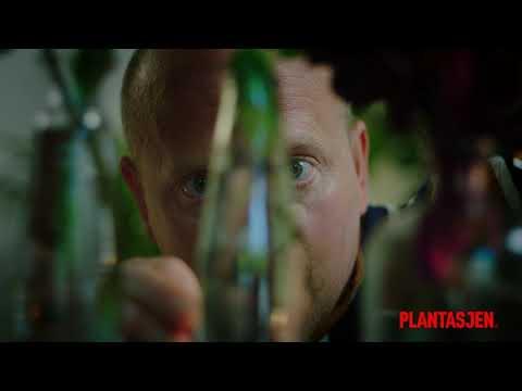 Planter som trives inne. Hos deg!