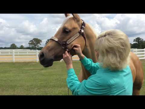 Fitting a Halter with AQHA Professional Horsewoman Jerri Harmon