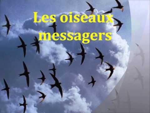 Les oiseaux messagers ::