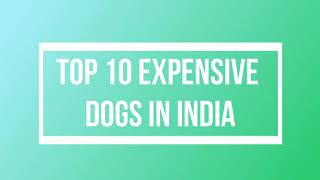 Top 10 most expensive dogs in India