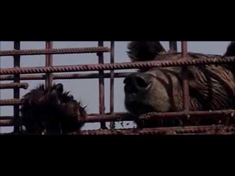 Free caged, forgotten bears in Romania