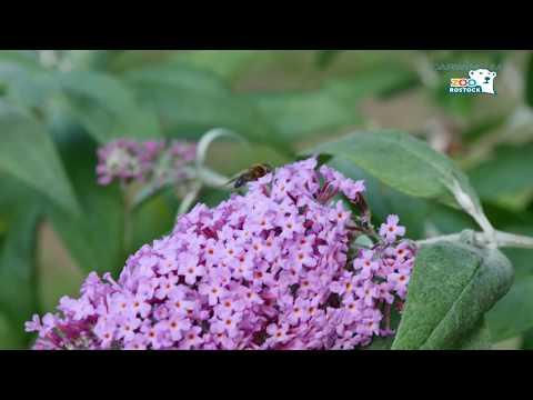 Zoo Rostock | Teil 2: Von der Blüte bis zum Honig