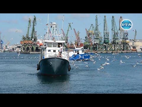 BTA: Риболовът в Черно море трябва да е устойчив и щадящ