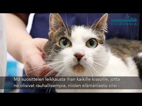 Miten ehkäistä kissan lihominen leikkauksen jälkeen?