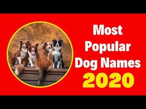 Top 10 Most Popular Male  and Female Dog Names With Meaning 2020 ! Unique Dog Names