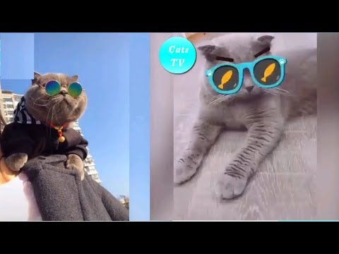 Funny Cat Videos Compilation 2019 | Cute Kitten Video Is Not Enough #6