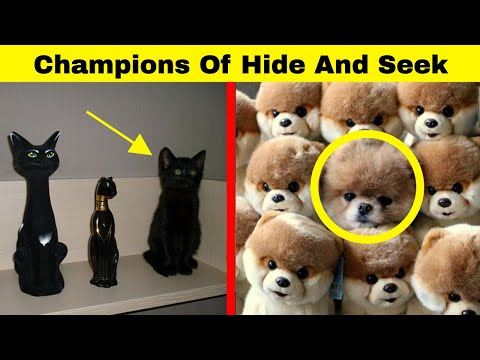 Hilarious Animals Who Are The Absolute Champions Of Hide And Seek - UCWv2oOr-VnM5z7-Eb_NlWfA