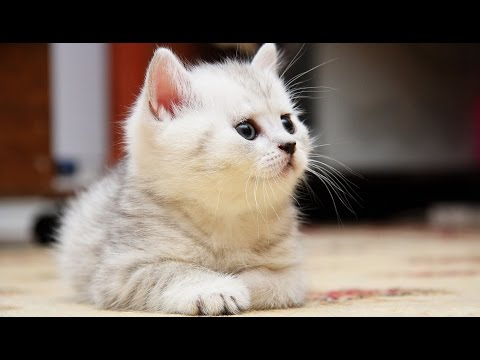 Funny and Cute Fluffy Kittens Compilation - UCVUdHi-tdW5AKdzMiTPG97Q