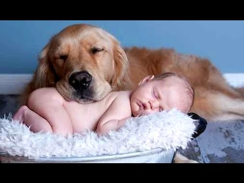 Best Of Funny Cats And Dogs Love Babies Compilation 2015 || NEW - UCCLFxVP-PFDk7yZj208aAgg